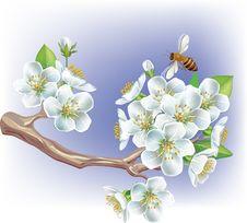 Free Flowering Branch Stock Photos - 18769943