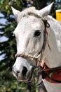 Free Farm Horse Royalty Free Stock Photos - 18773348