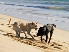 Free Dogs At Sea Beach Stock Image - 18770311