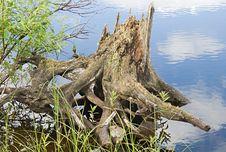 Free Snag On A River Coast Royalty Free Stock Photos - 18771528