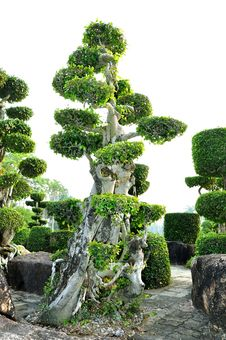 Topiary Work Stock Photography