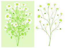Free Green Branch With White Flowers Stock Photography - 18775472