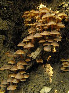 Free Brown Mushroom Royalty Free Stock Photo - 18776075