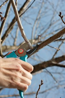 Free Pruning Stock Photos - 18776393