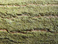 Free Tree Bark With Green Lichen Stock Photo - 18777380