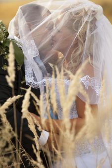 Free Wedding Couple In Eared Field Stock Photography - 18778092
