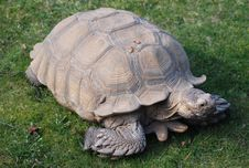 Free A Spur Thighed Tortoise Stock Images - 18778264