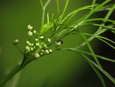 Ant On A Plant Royalty Free Stock Images