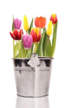 Free Tulips Stock Image - 18779241