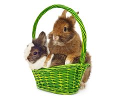 Free Rabbits In Green Basket Royalty Free Stock Images - 18781099