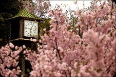 Free Sakura With Old Style Clock Stock Photo - 18782880