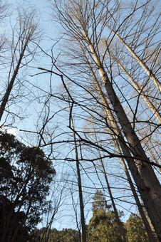 Free Trees Stock Image - 18783181