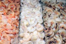 Free Variety Of Shrimp Royalty Free Stock Photo - 18784785