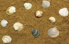 Free Sea Shells Royalty Free Stock Photography - 18787507