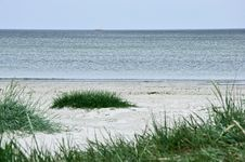 Free Green Grass On A Deserted Beach Stock Image - 18789181