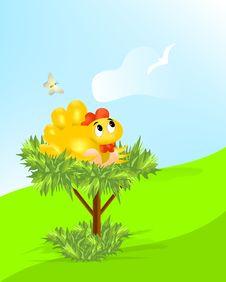 Hen With Eggs, Cdr Vector Stock Photos