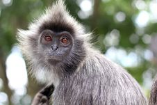 Free Portrait Of The Monkey Stock Images - 18794444
