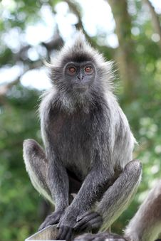 Free Portrait Of The Monkey Royalty Free Stock Images - 18794659