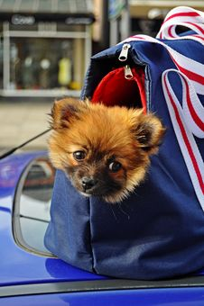 Doggy Bag Stock Photos