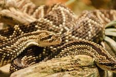Free Couple Of Snakes At The Zoo Royalty Free Stock Photos - 18795568