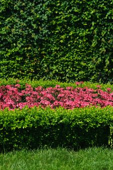 Free Evergreen Topiary And Flower Bed Stock Image - 18795841