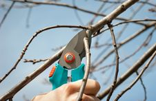 Free Pruning Royalty Free Stock Photography - 18796027