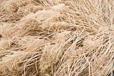 Free Pampas Grass Royalty Free Stock Images - 18798949