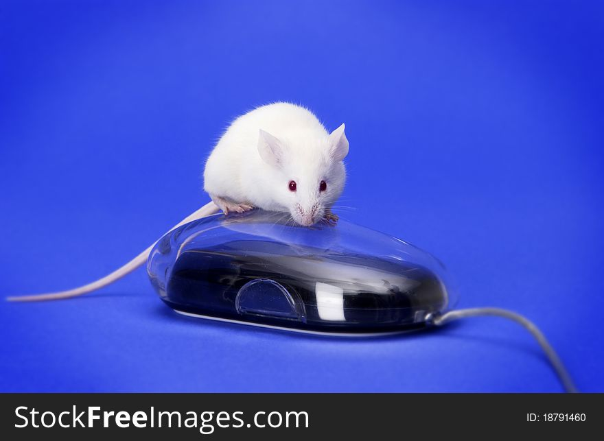 White mouse on a computer mouse