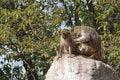 Free Monkeys Royalty Free Stock Images - 1884349