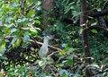 Free Heron Royalty Free Stock Image - 1887346