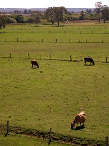 Cow Paddocks Galore Royalty Free Stock Photo