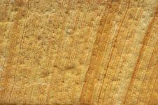 Stone Texture 02 Stock Photo