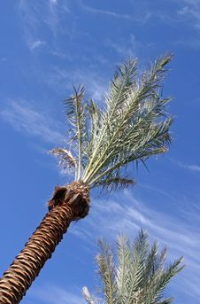Free Palm Tree Stock Photography - 1883102