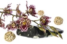 Free Orchid And Specific Stone Royalty Free Stock Photography - 1883577
