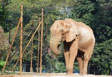 Free Elephant Royalty Free Stock Photo - 1883785