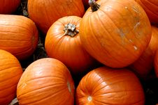 Free Pumpkins Royalty Free Stock Photography - 1883977