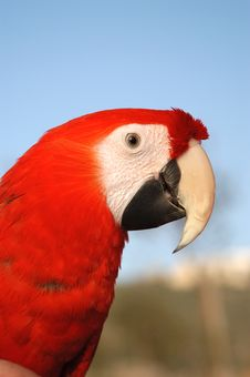 Free The Red Parrot Stock Photos - 1885033