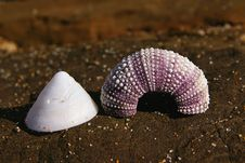 Free Sea Shells On Rock Stock Photo - 1885900