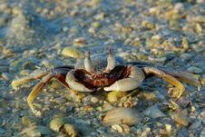 Free Close Up Of Crab Royalty Free Stock Photo - 1889265