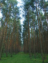Free Forest Stock Photos - 18801443