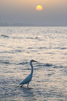 Free Heron Stock Photo - 18800240