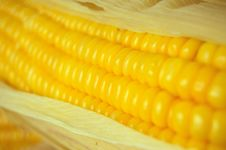 Corn Close-up Stock Image