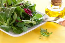 Free Fresh Salad On A Plate Royalty Free Stock Image - 18801946