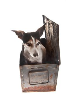 Free Dog In Container Stock Images - 18804114