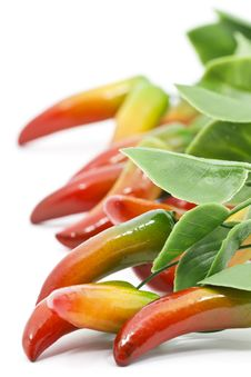 Free Chilli Peppers Royalty Free Stock Image - 18804806