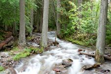 Free Forest Stream Stock Photo - 18805720