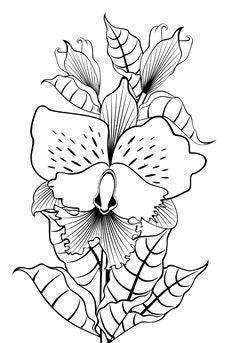 Free Beautiful Orchids Stock Photo - 18807060