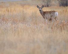 Free Deer Stock Photo - 18809300