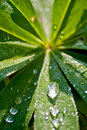 Free Morning Dew Stock Images - 18814954