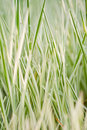 Free Grass Royalty Free Stock Photos - 18814968